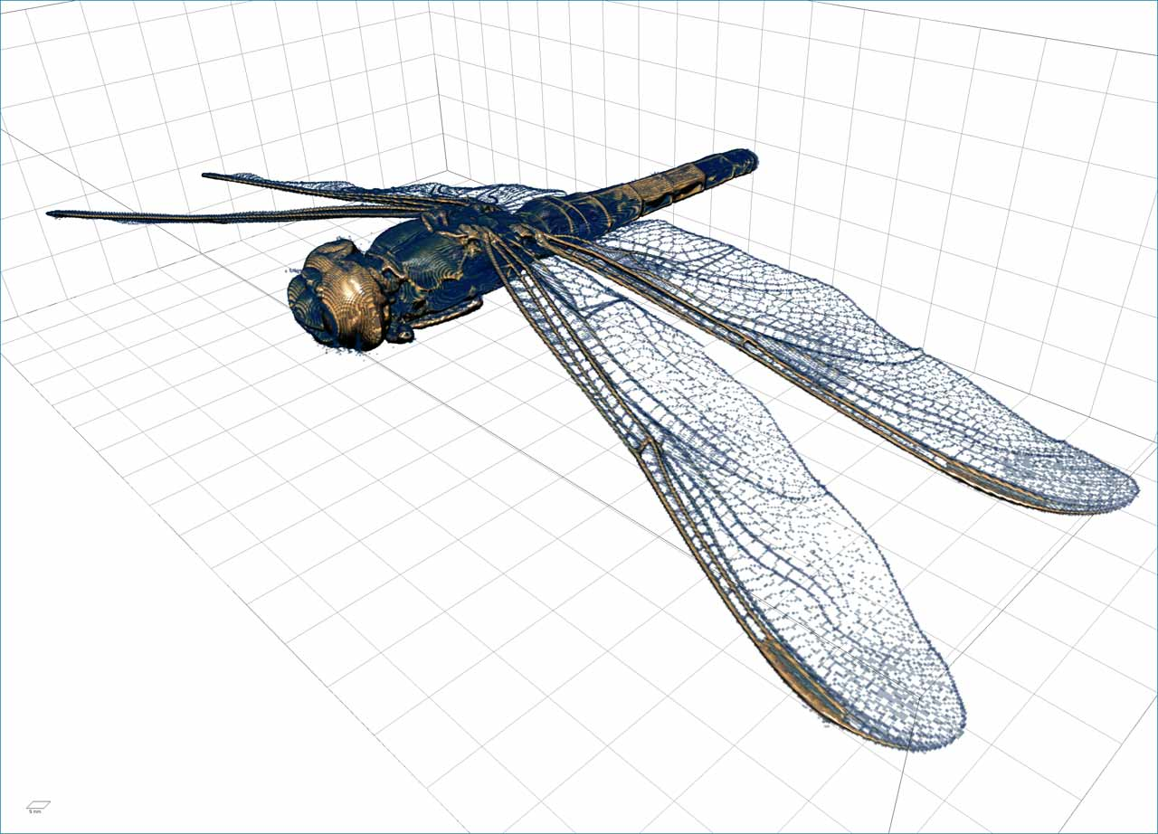 Spotted skimmer dragonfly: imaged by ZEISS Xradia 520 Versa, tomography rendered in Dragonfly Pro