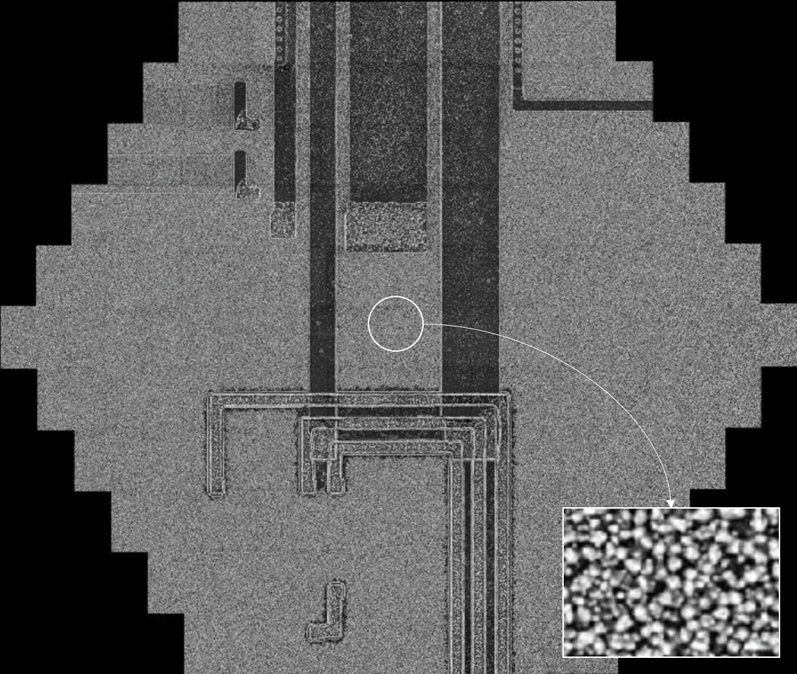 Multi-beam image at 200 µm acquired in 1.4s at 4.5 nm pixel size