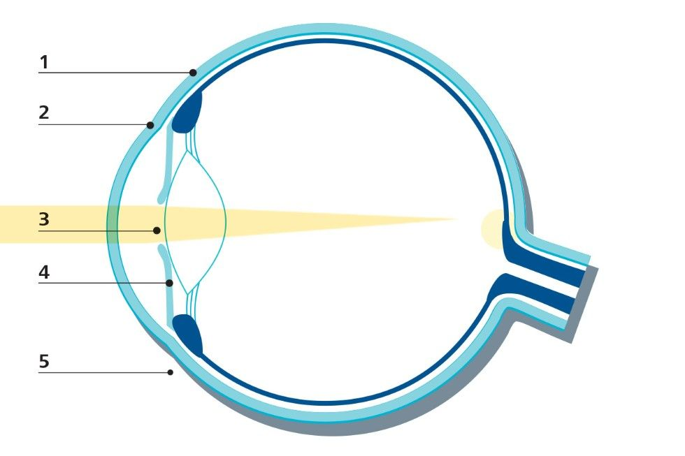 Anatomy Of The Eye Laser Eye Surgery Medical Technology Zeiss