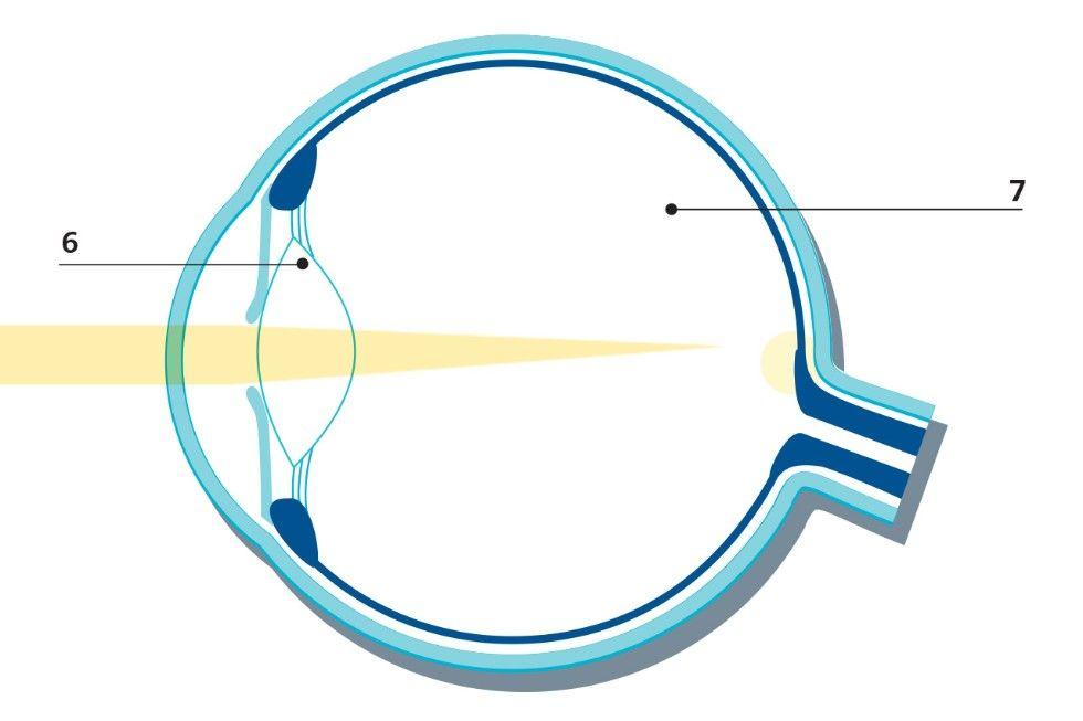 Anatomy of the Eye - Laser Eye Surgery - Medical Technology │ ZEISS ...