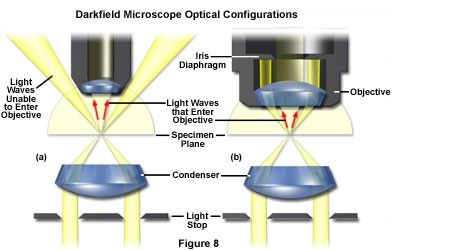 Improve contrasts in optical microscopy recently a renewed interest in transmitted darkfield microscopy has arisen due to its advantages when used in combination with fluorescence microscopy ccuart Images