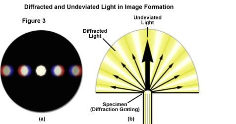 Diffracted and Undeviated Light in Image Formation