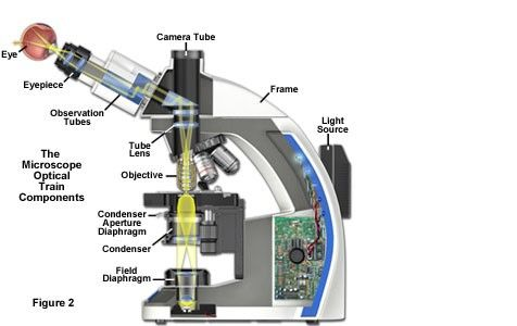 The Microscope Optical Train Components