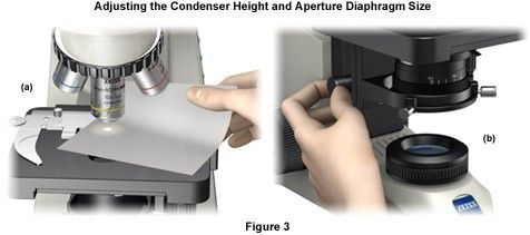 Adjusting the Condenser Height and Aperture Diaphragm Size