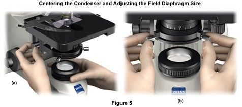 Centering the Condenser and Adjusting the Field Diaphragm Size