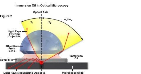 Immersion Oil in Optical Microscopy