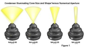 Condenser Illuminating Cone Size and Shape versus Numerical Aperture