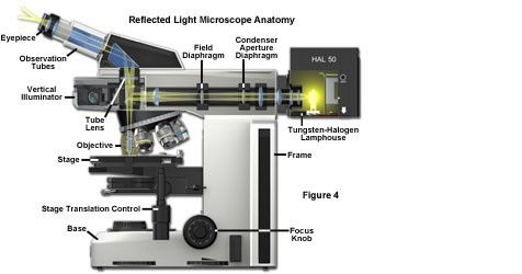 Reflected Light Microscopy Anatomy