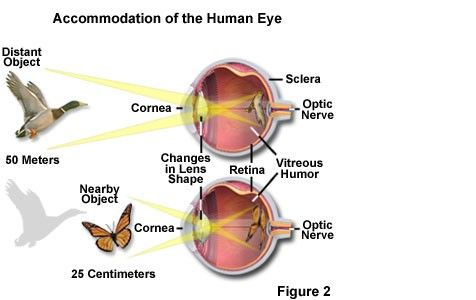 Accomodation of the Human eye