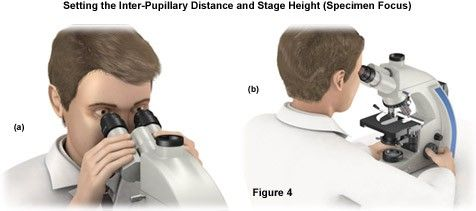 Setting the Inter-Pupillary Distance and Stage Height