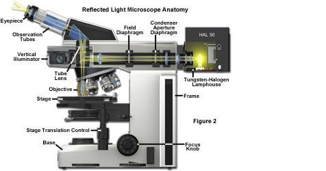 How to use a reflected light microscope inverted reflected light microscope stands incorporate the vertical illuminator within the body of the microscope many types of objectives can be used with ccuart Image collections
