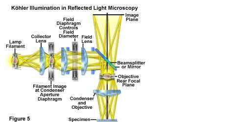 How to use a reflected light microscope in reflected light khler illumination illustrated schematically in figure 5 an image of the light source is focused by the collector lens onto the ccuart Images